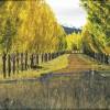 Country Lane, Glen Innes