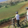 Bicycling, Hunter Valley