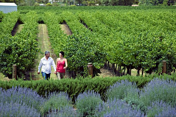 Walking through Bella Lavender Estate