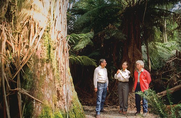 Great Short Walks - Evercreech Forest Reserve
