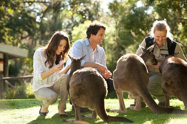 Couple with kangaroos at Healesville Sanctuary