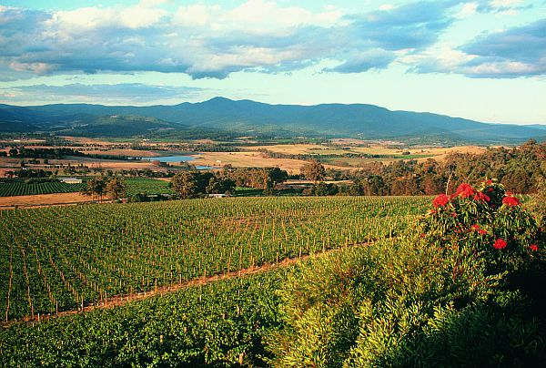 Vineyards - Yarra Valley