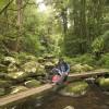 Brindle Creek, Border Ranges NP