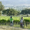 Cycling at Mt Frome vineyard