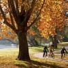 Norieul Park, Albury