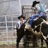 Rodeo Action, Mendorran