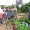 Mango Hill Farm