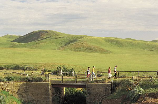 Walking - Clare Valley