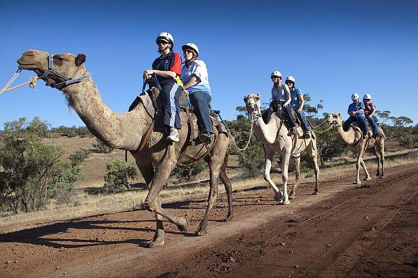 Pichi Richi Camel Tours