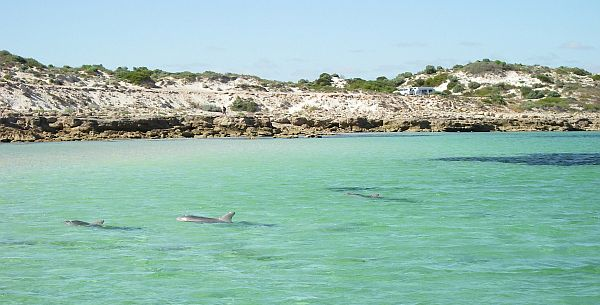 Dolphins at Barkers Rocks