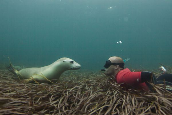 Swimming With A Sea Lion