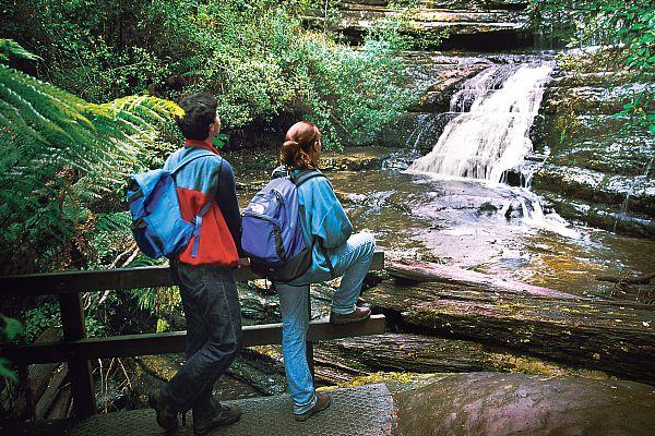 Great Short Walks - Lady Barron Falls Loop Track