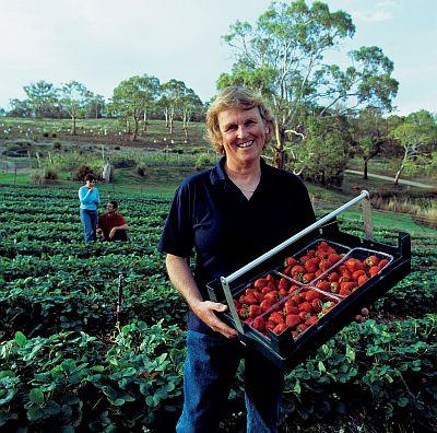 Kate's Berry Farm