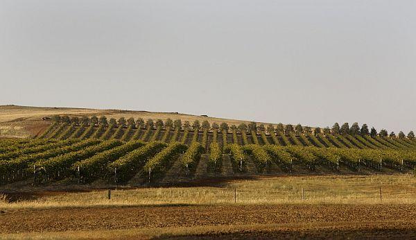 Winery - Heathcote