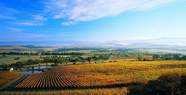 Vineyards - Yarra Valley
