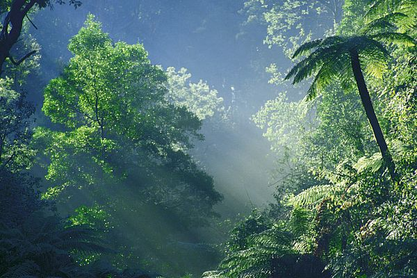 Rainforest at Orbost