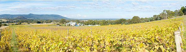 Vineyard - Hanging Rock Winery